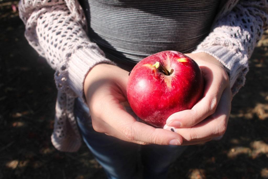 Green Bluff Apple Pickin' | Catching Seeds