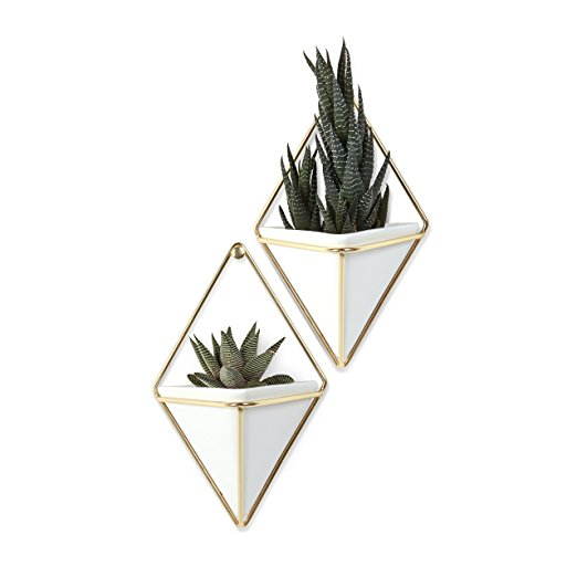 Wall Hanging Succulent Pot | The Best Christmas Gifts (that you can buy without leaving the house!) | CatchingSeeds.com