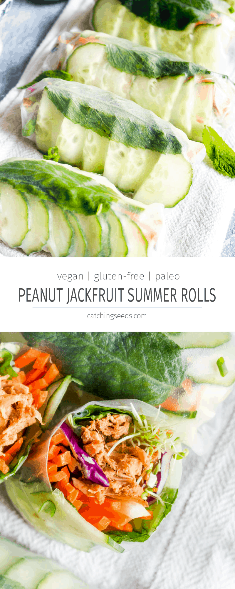 Peanut Sauce Jackfruit Summer Rolls are made with a 5 minute peanut sauce, crunchy vegetables, and fragrant herbs! This healthy gluten free & vegan recipe is bursting at the seams with flavor! | CatchingSeeds.com