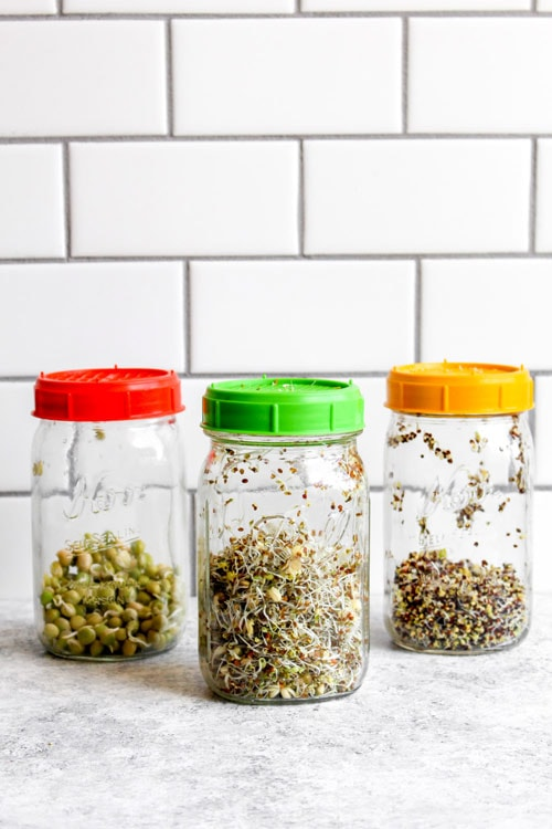 Sprouts growing in mason jars on day 3.